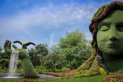 Vegetal giant Stock Image