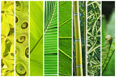 Vegetal green gradation collage Stock Photo