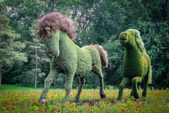 Vegetal horses from Mosaicultures of Montreal 2013 Royalty Free Stock Images