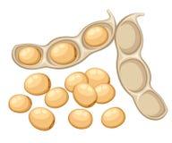 Vegetal inteiro fresco do feijão de soja da ilustração aberta da vagem de feijão do alimento biológico do jardim isolada na site  ilustração royalty free