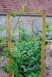 Vegetal & jardim com camas aumentadas e quadro rústicos do país para plantas de escalada Fotografia de Stock Royalty Free