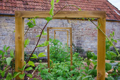 Vegetal & jardim com camas aumentadas e quadro rústicos do país para plantas de escalada Fotos de Stock Royalty Free