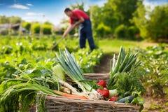 Vegetal misturado na cesta de vime no jardim Imagem de Stock Royalty Free