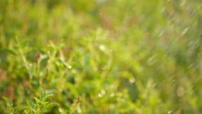 Vegetal molhando no jardim filme