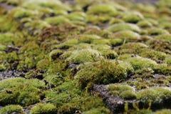 Vegetal mus Stock Photos