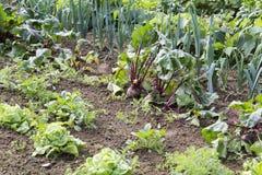 Vegetal no jardim Imagem de Stock Royalty Free