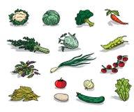 Vegetal orgânico Fotografia de Stock Royalty Free