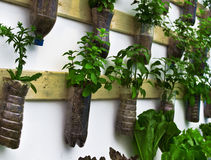 Vegetal orgânico Fotos de Stock