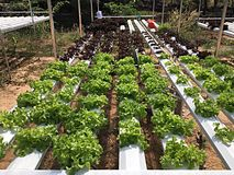 Vegetal orgânico Imagens de Stock Royalty Free