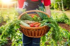 Vegetal orgânico misturado na cesta de vime Fotos de Stock