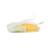 Vegetal saboroso Imagens de Stock Royalty Free