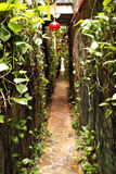 Vegetal street. A green vegetal street in the city of Malacca in Malaysia in south east asia royalty free stock photo