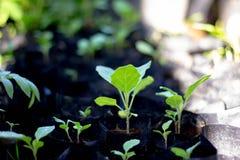 Vegetal verde imagens de stock