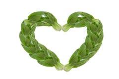 Vegetal verde fotos de stock