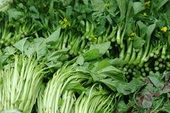 Vegetal verde chinês imagens de stock