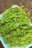 Vegetal verde da venda selvagem no mercado, Tailândia Fotografia de Stock Royalty Free