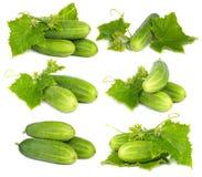 Vegetal verde do pepino Foto de Stock Royalty Free