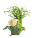 Vegetarial raw food on white Stock Image