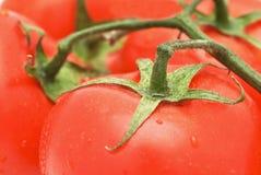 vegetarian томата ед стоковое фото