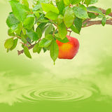 Vegetarian. Tree with apple on a green lake Royalty Free Stock Images