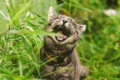 The cat is eating grass in the park. royalty free stock photography