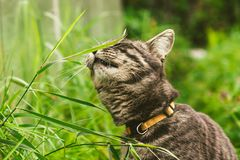 The cat is eating grass in the park. stock images