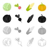 Vegetarian, diet, food and other web icon in cartoon style.Vegetable garden, farm, icons in set collection. Stock Photography