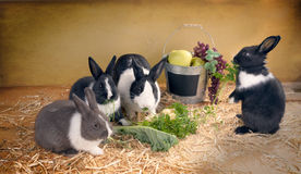Vegetarian dinner with family of rabbits. Rabbit mother and children Royalty Free Stock Image
