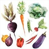 Vegetarian för strikt vegetarian för rotfrukter för bakgrundstapettextur Arkivbilder