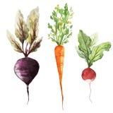 Vegetarian för strikt vegetarian för rotfrukter för bakgrundstapettextur Royaltyfri Foto