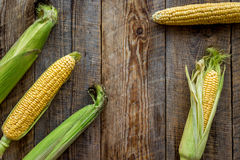 Vegetarian food. Corn cobs on rustic wooden background top view copyspace Stock Image