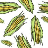 Corn pattern. Vegetarian food. Hand drawn cornseamless pattern. Vector vintage vegetables illustration.  For wrapping paper, street festival, farmers market Royalty Free Stock Photo