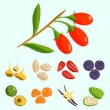 Vegetarian food healthy vegetable and fruits restaurant dishes cartoon berry vector. Vegetarian food healthy and vegetable vegetarian green food fresh organic Royalty Free Stock Photo