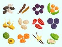 Vegetarian food healthy vegetable and fruits restaurant dishes cartoon berry vector. Vegetarian food healthy and vegetable vegetarian green food fresh organic Stock Photos