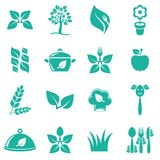 Vegetarian food icons. Green vegetarian food icons on white background Stock Image