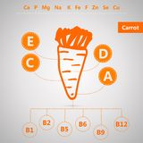Vegetarian food. Infographic for content of vitamins and minerals in carrot. Royalty Free Stock Photos