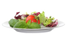 Vegetarian food (salad tomato basil) Royalty Free Stock Photo