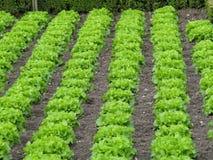 Vegetarian ingredient Stock Photography