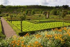 Vegetarian ingredient Royalty Free Stock Photography