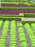 Vegetarian ingredient Stock Image