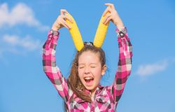 Vegetarian nutrition concept. Kid girl hold yellow corn cob on sky background. Girl cheerful hold ripe corns. Corn. Vegetarian and healthy organic product royalty free stock image