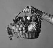 Vegetarian nutrition concept. Wicker basket with fresh vegetables. Farmer holds cabbage, radish, pepper, broccoli. Carrot, mushroom and lettuce. Male hand royalty free stock photos