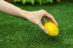 Vegetarian och nya frukt och grönsaker på naturen av temat: mänsklig hand som rymmer en gul citron på en bakgrund av gräsplan Royaltyfri Foto