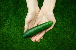 Vegetarian och nya frukt och grönsaker på naturen av temat: mänsklig hand som rymmer en gurka på en bakgrund av gröna gras Arkivbild