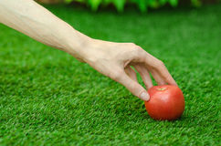 Vegetarian och nya frukt och grönsaker på naturen av temat: mänsklig hand som rymmer en röd tomat på en bakgrund av gräsplan gr Royaltyfria Bilder
