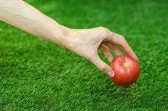 Vegetarian och nya frukt och grönsaker på naturen av temat: mänsklig hand som rymmer en röd tomat på en bakgrund av gräsplan gr Arkivfoton