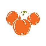 Vegetarian organic food simple illustration, vector ripe sweet o Stock Images