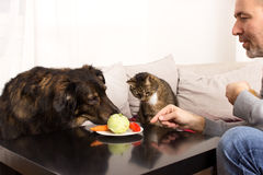 Vegetarian pets Stock Photos