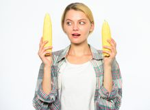 Vegetarian product. Girl practice eating only or mostly food uncooked and unprocessed. Woman farmer choose yellow corn. Cob on white background. Girl rustic royalty free stock photos
