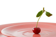Vegetarian ration for healthy eating. One cherry with stem and leaflets on pink dish Stock Images
